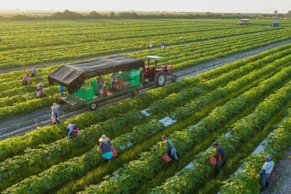 Organic mang lại nguồn sản phẩm bảo vệ sức khỏe.